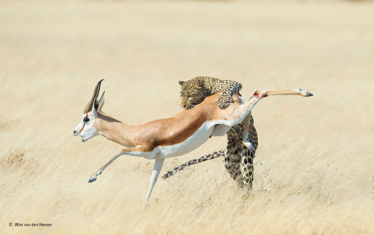 The final leap, Wim van den Heever, Sudáfrica