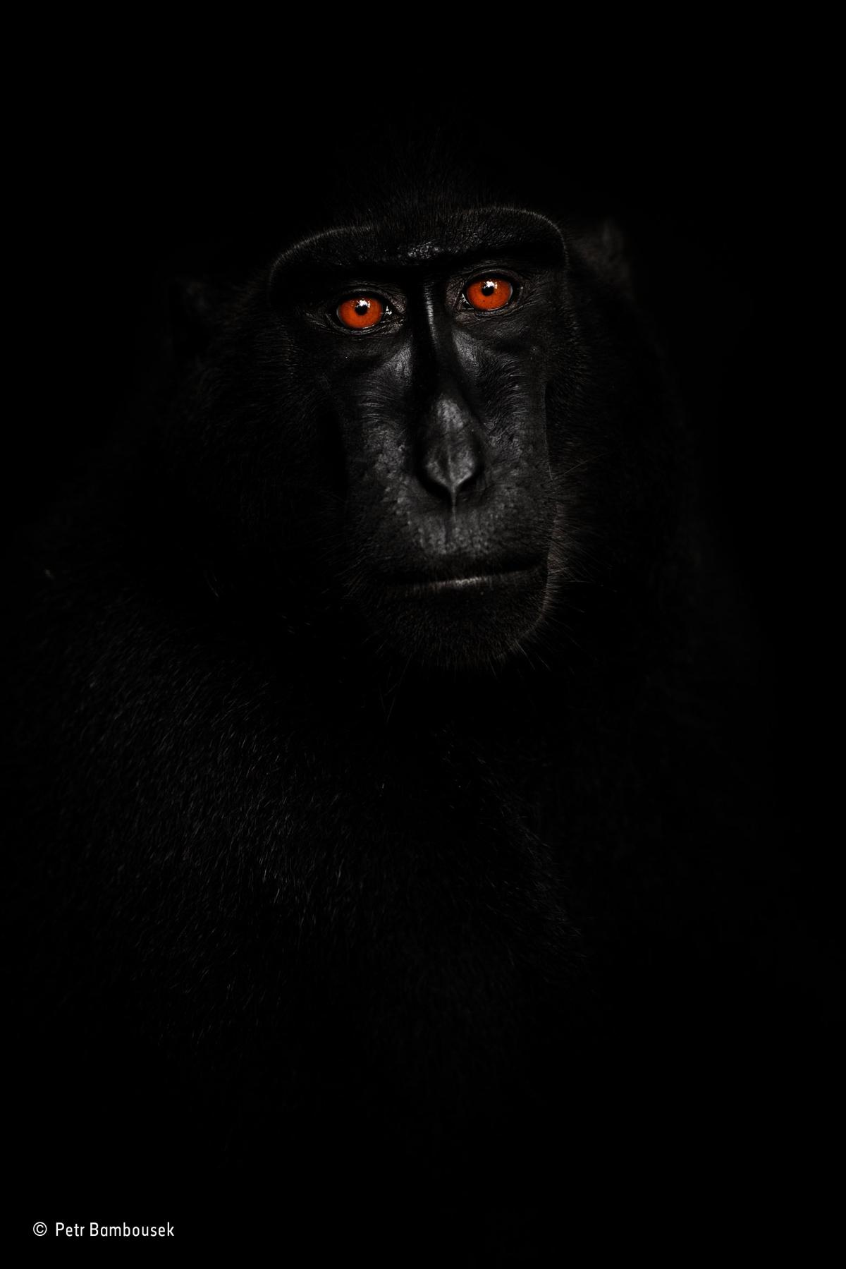 Reflection in black, Petr Bambousek, Republica Checa