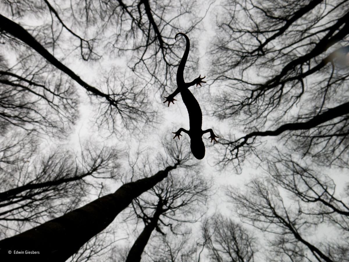 Still life, Edwin Giesbers, Países Bajos