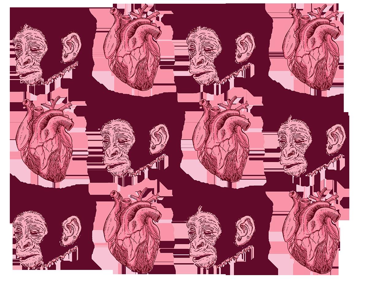 transplantes yaconic ciencia2