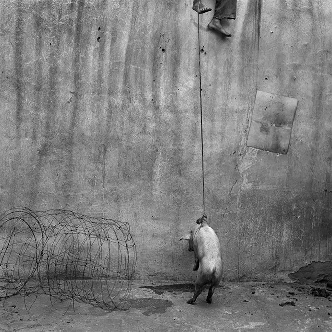 Hanging pig, 2001, Roger Ballen.