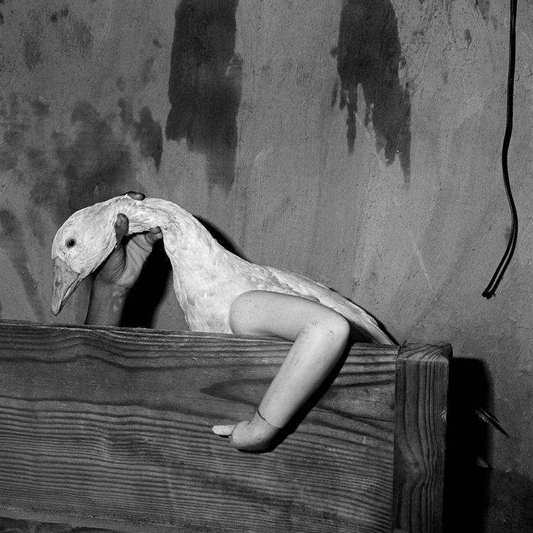One arm goose, 2004. Roger Ballen.
