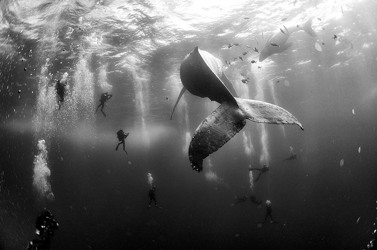 anuar patjane whale whisperers
