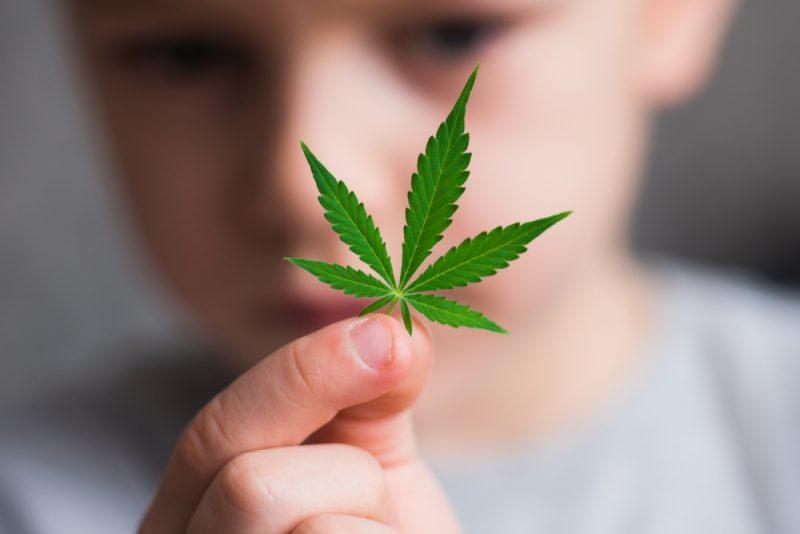 cannabis, mariguana