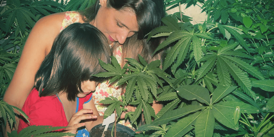 cannabis, mariguana,