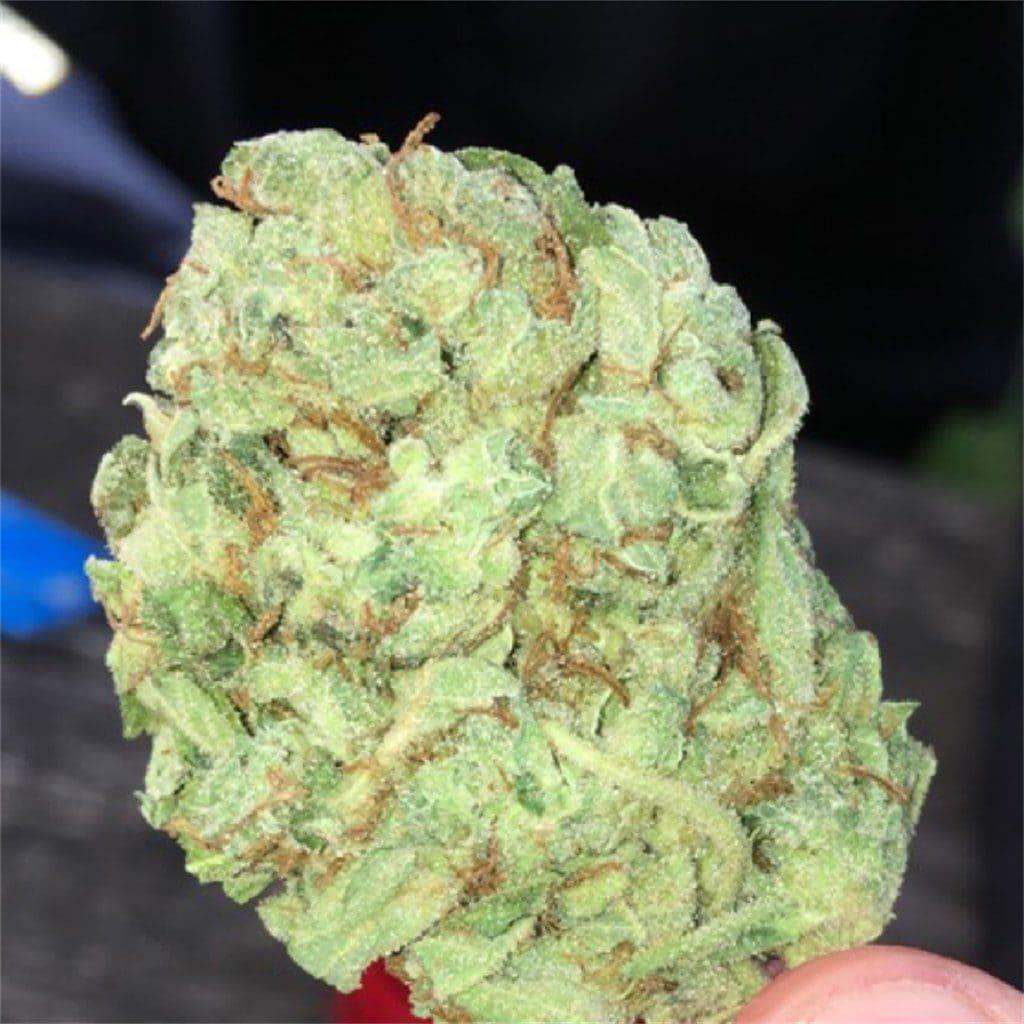 Super Lemon Haze cepas de marihuana