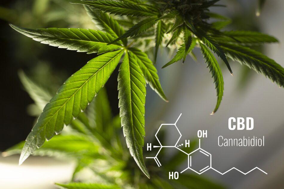 compuesto químico cannabidiol